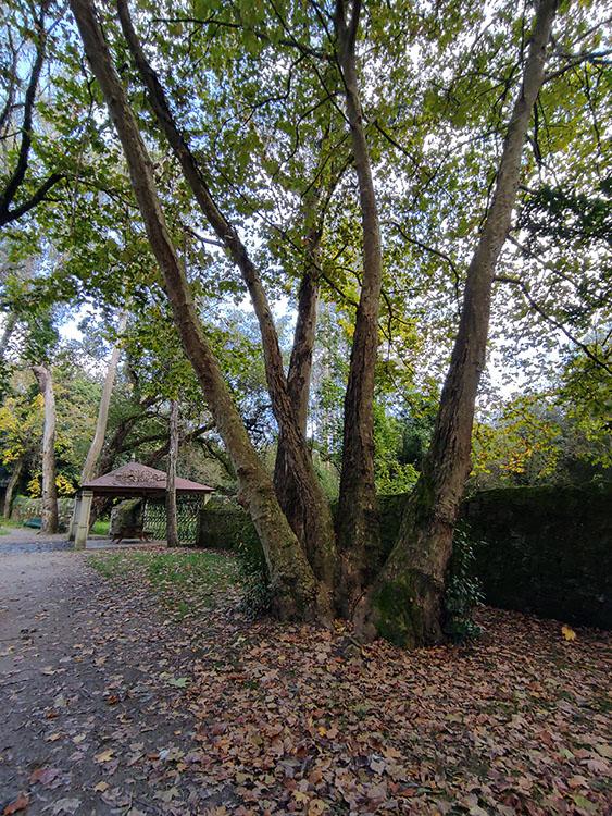Al fondo se puede observar el cenador principal del Banquete, y a su lado una agrupación de árboles formando una especie de árbol gigante con varios troncos.