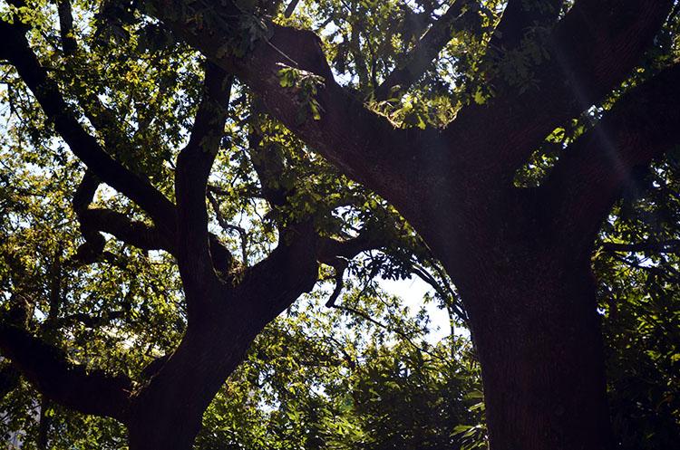 Bosque de Santa Susana