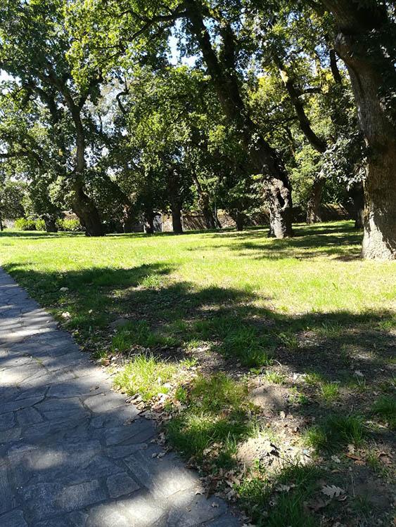 Ringleira de carballos de San Lourenzo