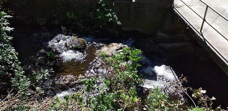 Vista del río Sar en una de las entradas al Banquete de Conxo, con una pequeña cascada y su vegetación de bosque de ribera