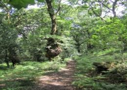Camiño na Selva Negra