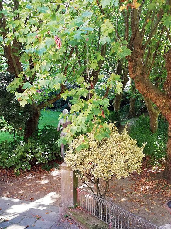 Vegetación en Finca Simeón