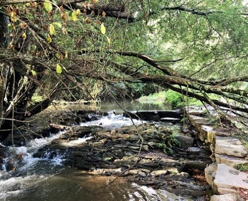 Río Sar no seu paso en Pontepedriña